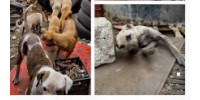Help Save the Abandoned & Suffering Dogs