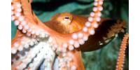 John G Shedd Aquarium
