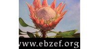 Elizabeth Bowers Zambia Education Fund