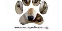 Never Cry Wolf Rescue and Adoptions - NCWRA