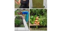 Filmore Gardens Community Garden