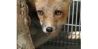 Help Save Cape Cod's Wildlife