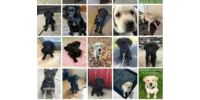 Guiding Eyes For The Blind Puppy Program