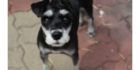 Help Cecilia save street dogs in third world countries such as Bolivia