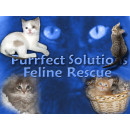 Purrfect Solutions Feline Rescue