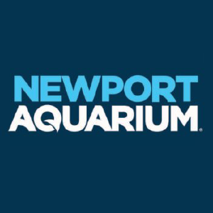 photograph regarding Newports Coupons Printable called 55% Off Newport Aquarium Coupon codes, Promo Codes, Sep 2019