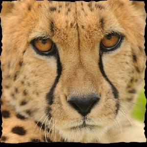 3 Off Cincinnati Zoo Coupons Promo Codes Sep 2019