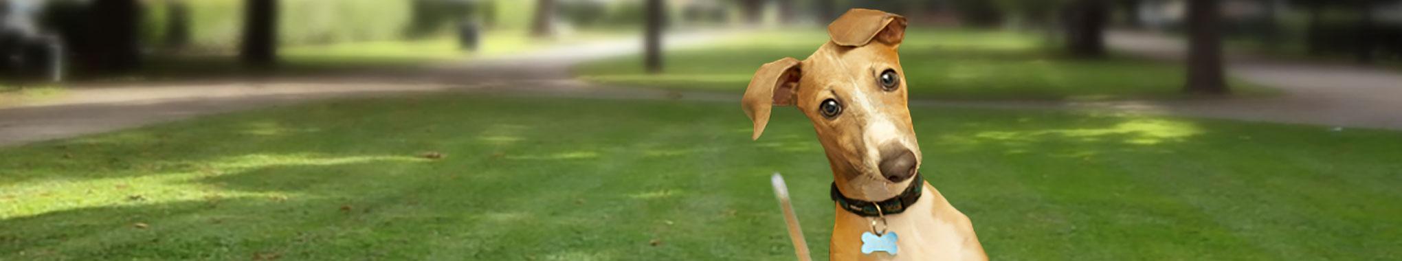 banner-FAQ-dog