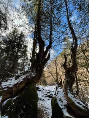 昼の後「大滝」へ ホテルから歩いて5分くらいの所に渓谷に降りる階段がある。...