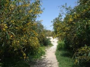キプロス パフォス 古代の王家の墓が地下から掘り出されている 周囲はエニシ...