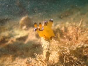 もはやピカチュウ以外には見えない! 他の魚も色が美しい✨
