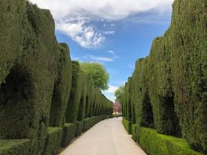 ヘネラリフェの庭園。 アルハンブラ宮殿から思ったよりも遠くて、 ヘトヘトだ...