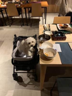 夕飯も犬と一緒です。他のテーブルもほぼ犬と一緒。ここは犬も泊まれるホテルと...