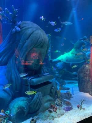 レゴランドリゾートにはなんと水族館もありました。  子供が見やすく、広...