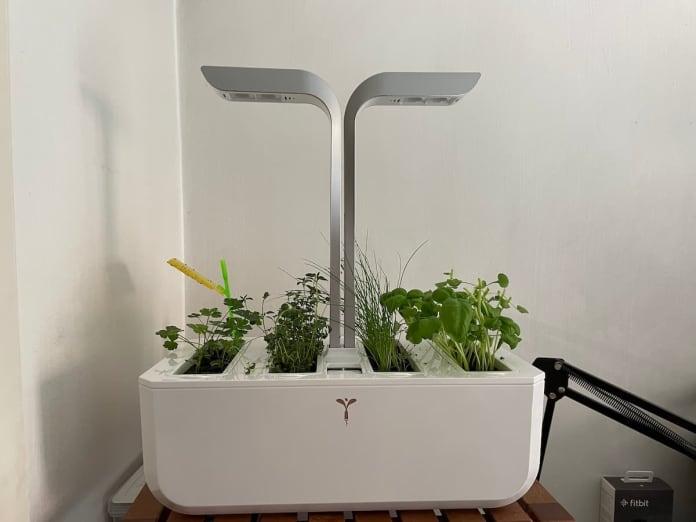 veritable indoor smart garden on shelf