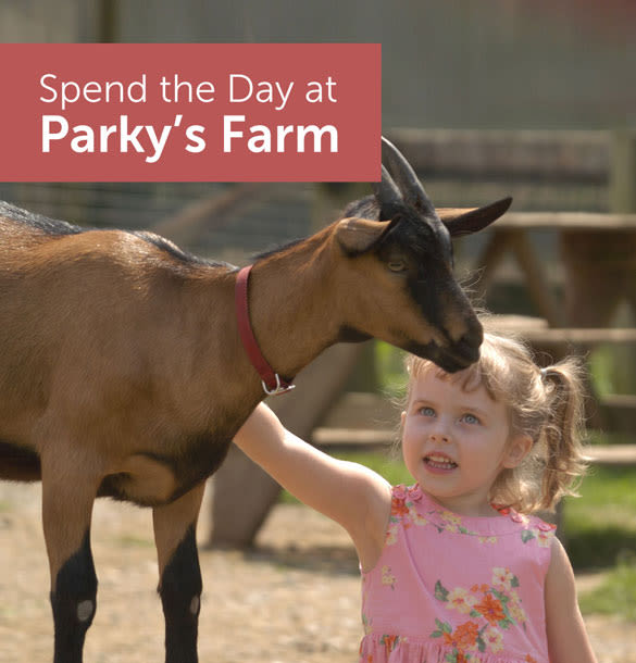 Spend the Day at Parky's Farm