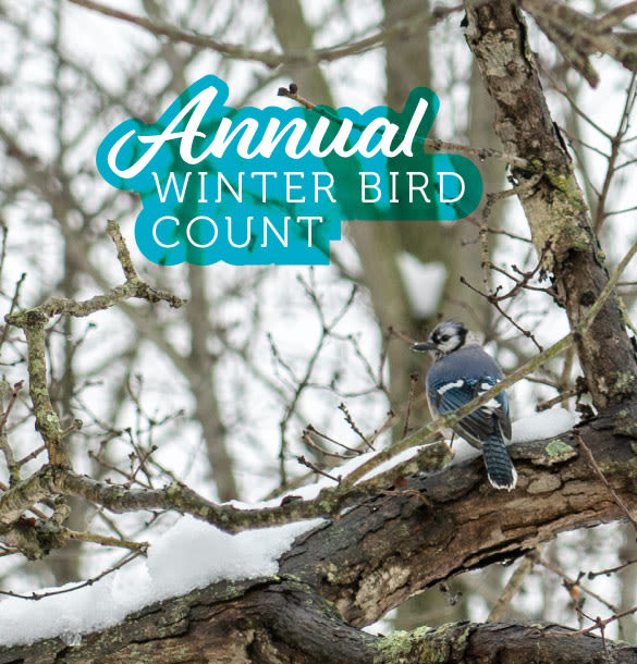 Annual Winter Bird Count