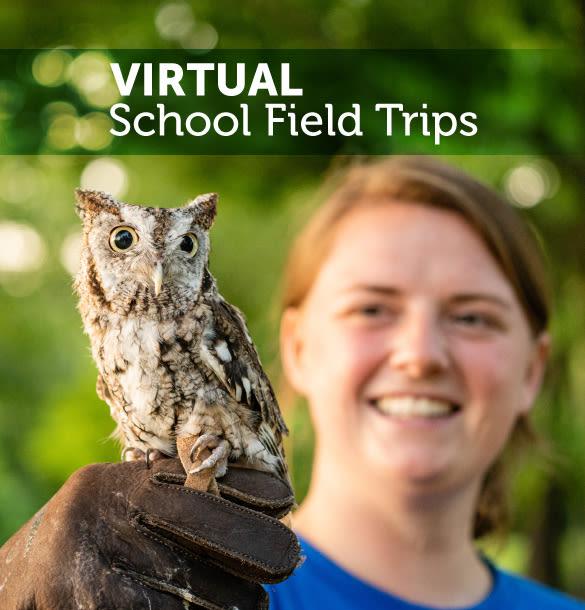 Virtual School Field Trips