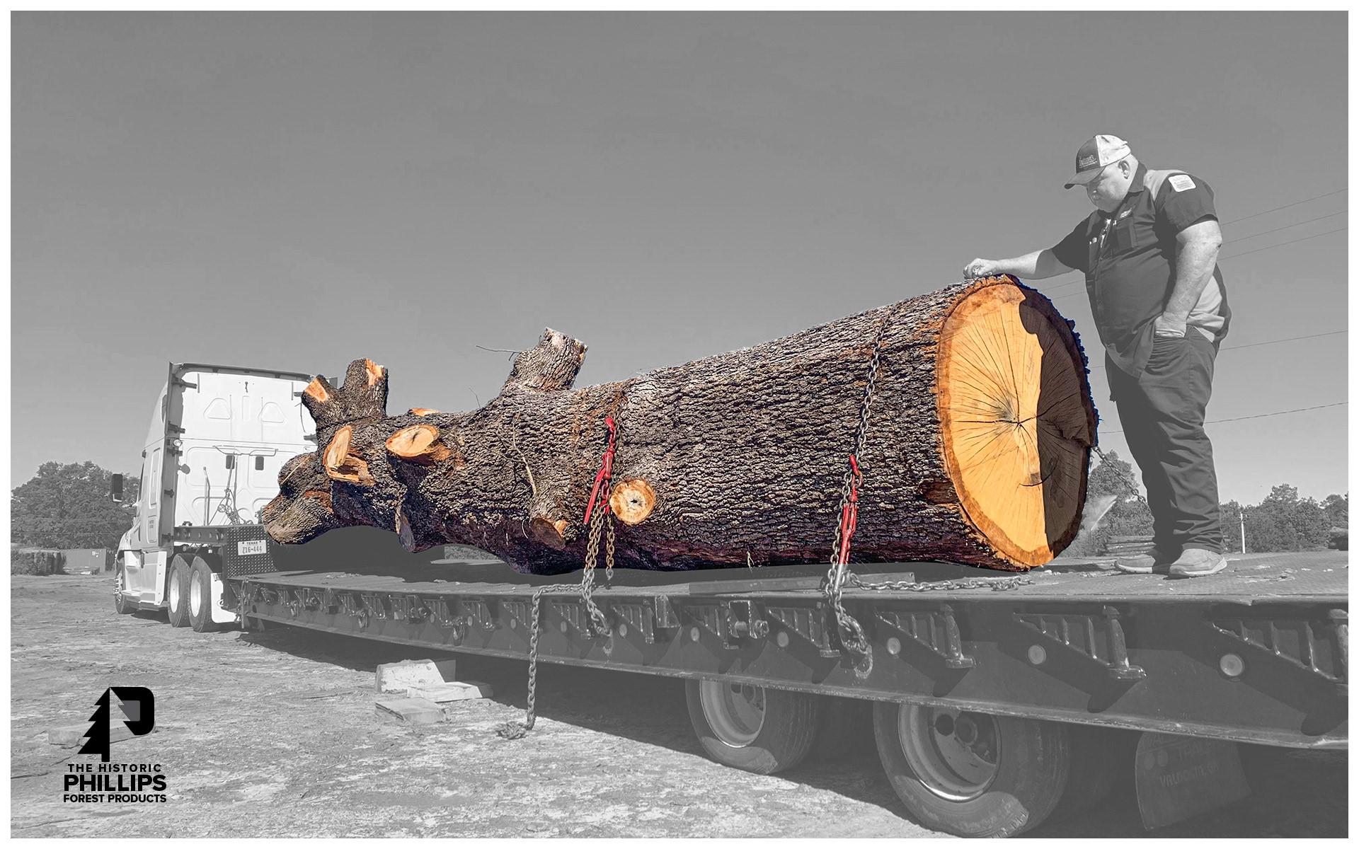 Post oak log