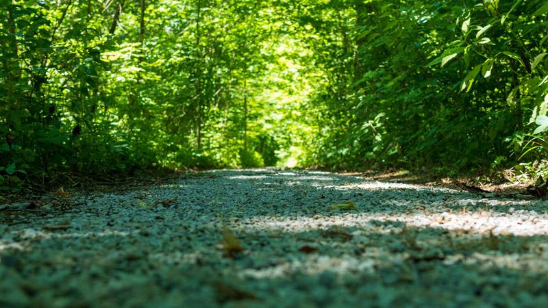 School Trail