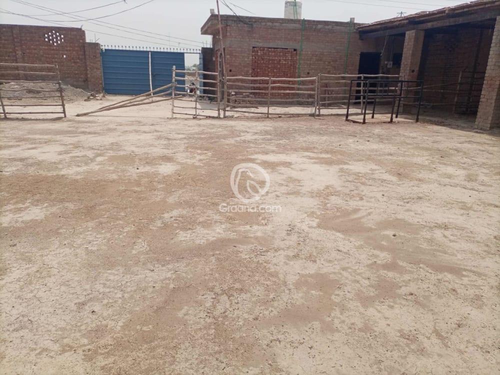0.25 Acre Farmhouse Plot For Rent   Graana.com