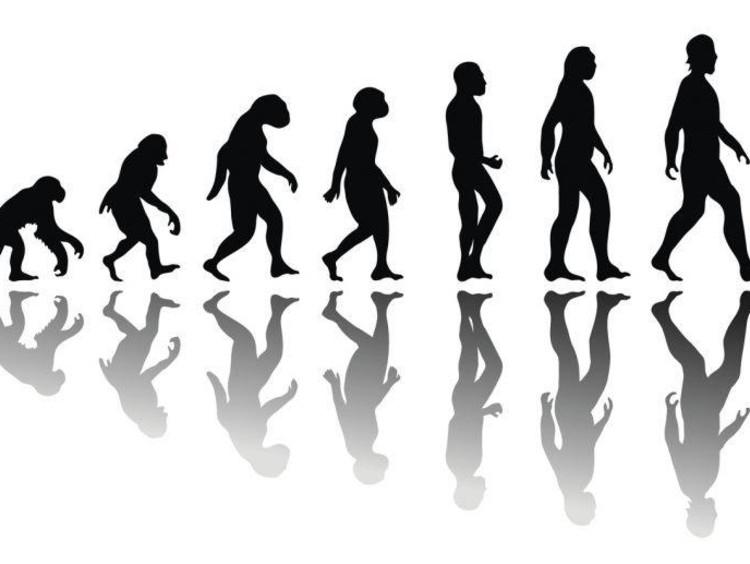monkey to human evolution process