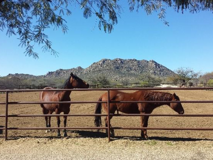 Two horses out near a fence in Rancho Milagro