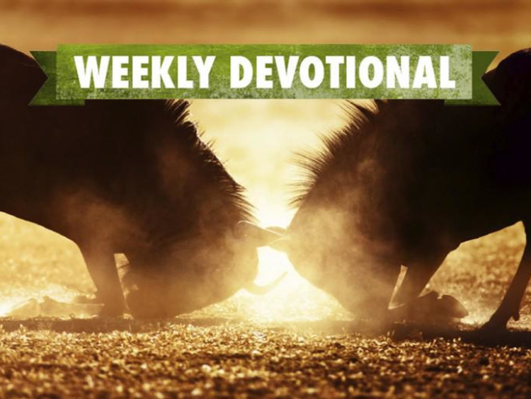 Two animals fighting under the Weekly Devotional banner