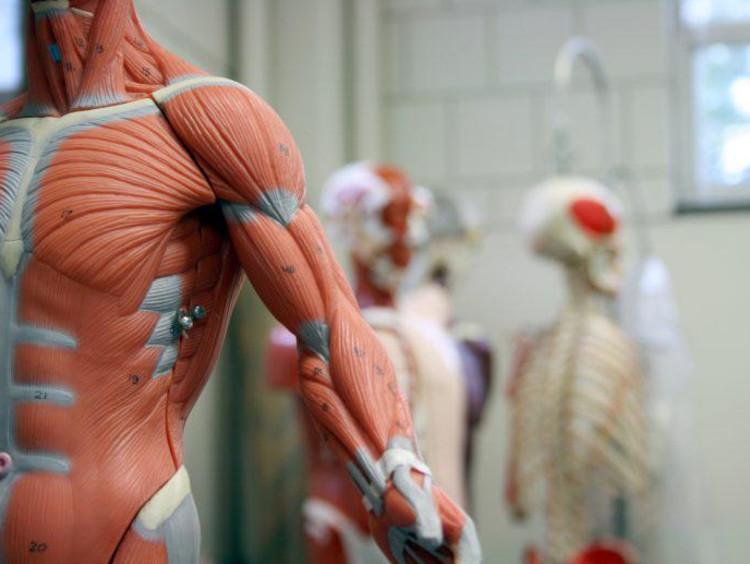 Image of anatomy
