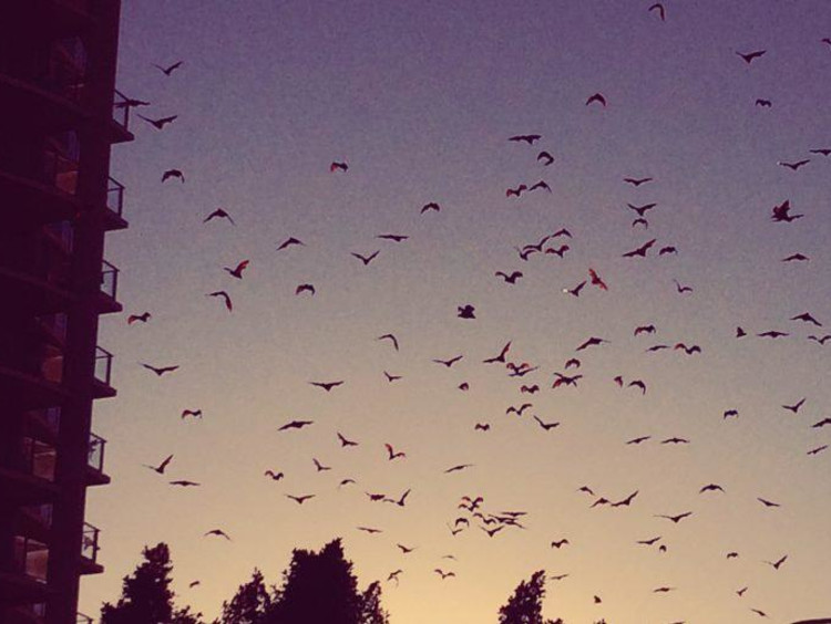 Evening shot of a swarm of seagulls in Cairns in Australia