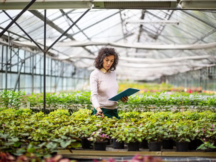 Woman examines plants in a greenhouse