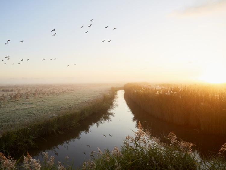 river leading toward gathering of birds and horizon