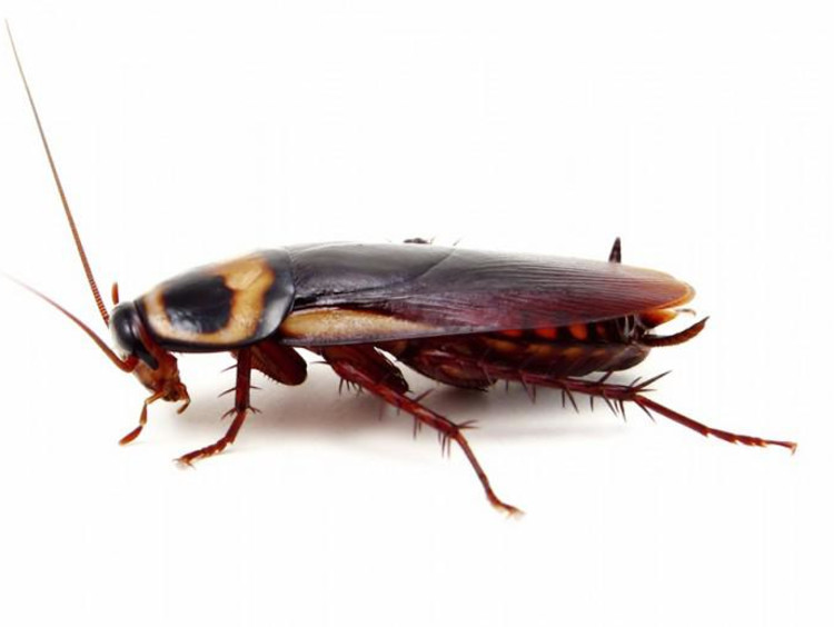 Cockroach graphic