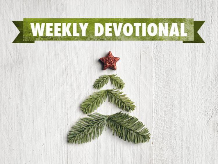 Weekly Devotional: Christmas tree stock image