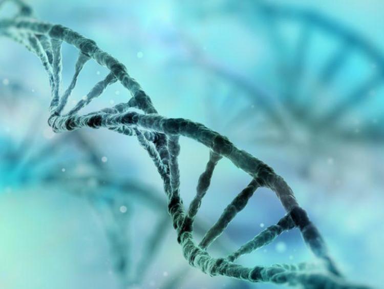 DNA diagram