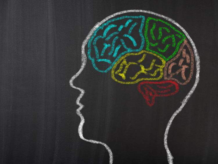 White outline of a head on a black board with different colored chalk outlines for the brain lobes