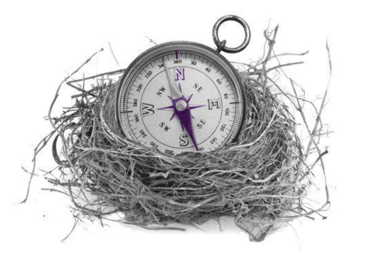 compass in nest