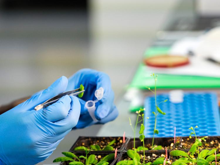 Nutritional scientist analyzing plants