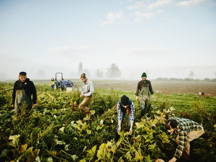 Conscious farmers responsibly harvesting squash