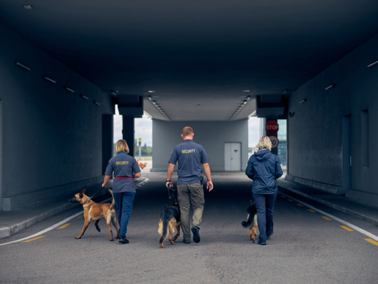 Three security guards with dogs