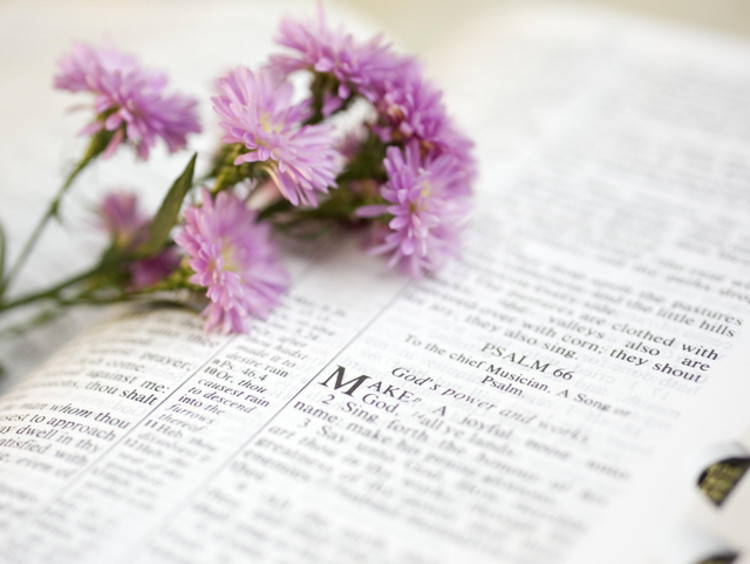 Pink flowers laying on a Bible opened to Psalm 66