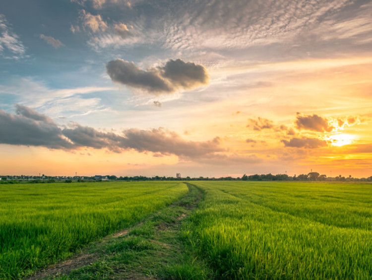 Image of a field and sky at sunset