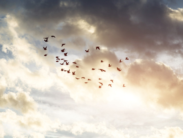 Group of doves fly in unison