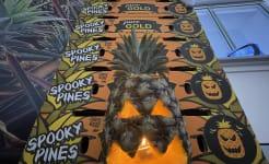 Spooky_pines_Tropical_Pines_28.09.21.JPG