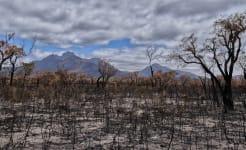 bushfire-4772185_1280.jpg