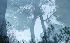 smoke_trees.jpg