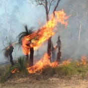 640px-Grass_tree_on_fire_during_controlled_burn.jpg