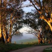 Morning_Light_-_Nairne_-_Leeo_Photography.jpg