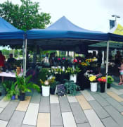 North Shore Markets