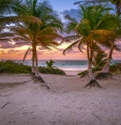 Sunrise, palms and beach in Tulum, Mexico